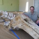 higley-with-whale-skeleton