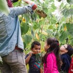 Kindergarten students admire a sunflower held by an Oxbow Farmer Educator while snacking on carrots during their fall field trip. Photo credit: 2016 Jess Eskelsen