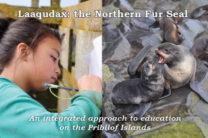 Laaqudax, the Northern Fur Seal: an Integrated Approach to Education on the Pribilof Islands