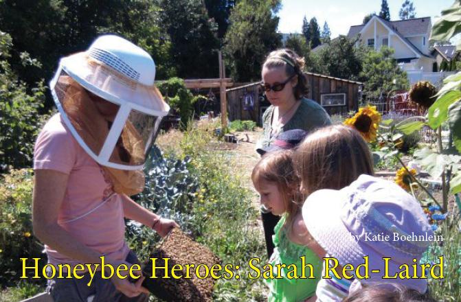 Honeybee Heroes: Sarah Red-Laird at Bee Girl