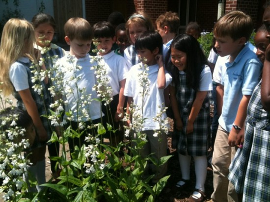 Pollinator-Garden-1st-Grade-Looking-at-Plant-They-Grew