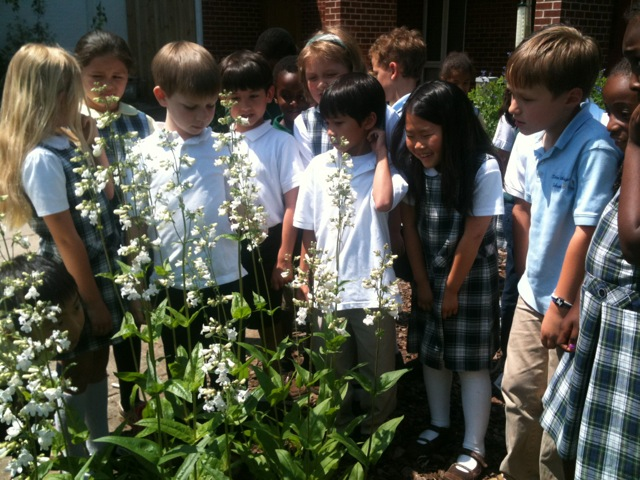 Gardens Grow Minds: The School as Green Educator