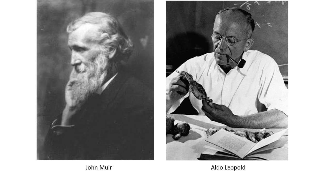 EE Research Summary: Comparing the Philosophies of Muir and Leopold