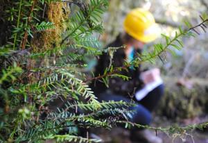 ELP-Tree-Study