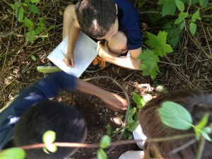 Figure 2: Students collaborate to gather data about the number and diversity of species they can observe and record in their habitat sampling area.